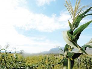 'El campo, es nuestra riqueza': Núñez