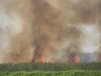 Voraz incendio arraso con pastizales de Jonuta