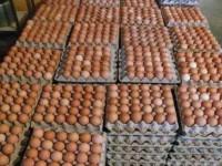 Confiscan miles de huevos