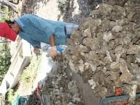 Cuadruplican  producción  ostrícola