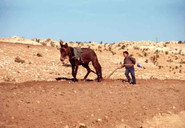Miseria y muerte por sequía en Marruecos