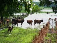 En crisis producción lechera