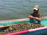 No respetan pescadores furtivos la veda de ostión