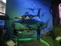 Renovada museografía en Museo de Historia Natural