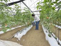 Agroindustria ofrece  futuro promisorio