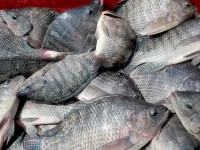 Escasez de pescado en plena Cuaresma