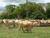 Preocupa sequía extrema a productores de ganado