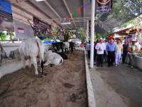 Ganadería tabasqueña, orgullo nacional: Núñez