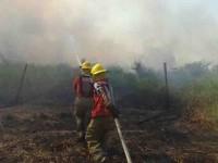 Siniestradas 40 hectáreas de popal por tres incendios