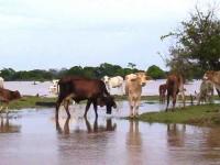 Alerta de ganaderos y campos petroleros