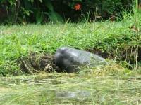 Urgente que se protega la  flora y fauna de Jonuta