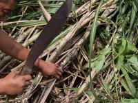 Urgente rescatar el campo del Plan Chontalpa para producir