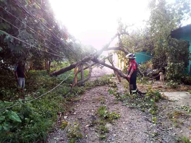 Sólo daños materiales por caída de árboles