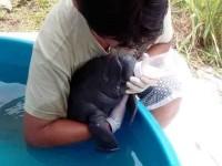 La UJAT a favor de la preservación de manatíes