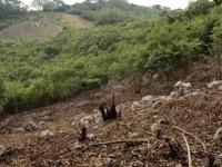Deforestan bosques para sembrar maíz y pastizales