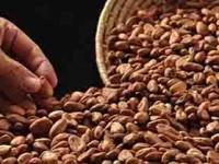 Cae precio del cacao
