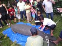 Imparte la UJAT taller para la conservación del manatí