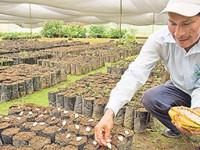 Negro panorama para cacaoteros