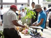 """En marcha la Expo  Sustentable """"Chonojob"""""""