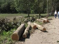 Tabasco, uno de los estados  del país más deforestado