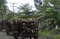 Aumenta la tala de árboles maderables