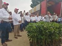 Entregan 50 mil plantas de café arábiga a productores