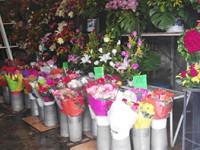 Flores, no seducen