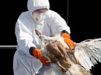 Resurge gripe aviar en Filipinas