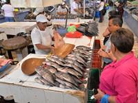SOS piden vendedores de pescados y mariscos antes las bajas ventas