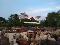 Suspenden embarque de ganado al Norte y a EU
