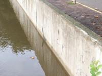 Empieza a bajar nivel del río Grijalva: IPCET