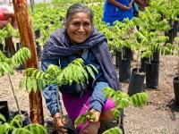Paga Bienestar a sembradoras y sembradores